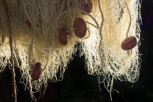 漁網 プレゼンテーション 海 海 ボート ストックフォト © Fotografiche