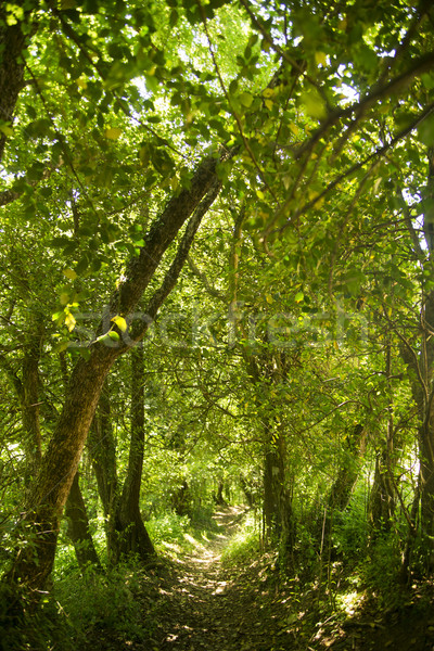 森林 パス 森 夏 シーズン 太陽 ストックフォト © Fotografiche