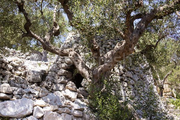 Stok fotoğraf: Tipik · taş · Bina · hayvan · barınak · manzara