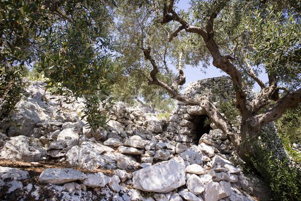 Típico piedra edificio animales abrigo paisaje Foto stock © Fotografiche