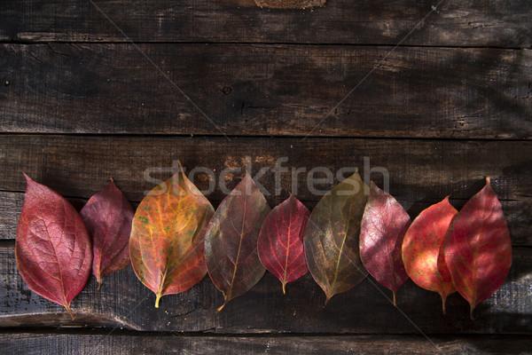 Laisse kaki tapis couleurs typique Photo stock © Fotografiche
