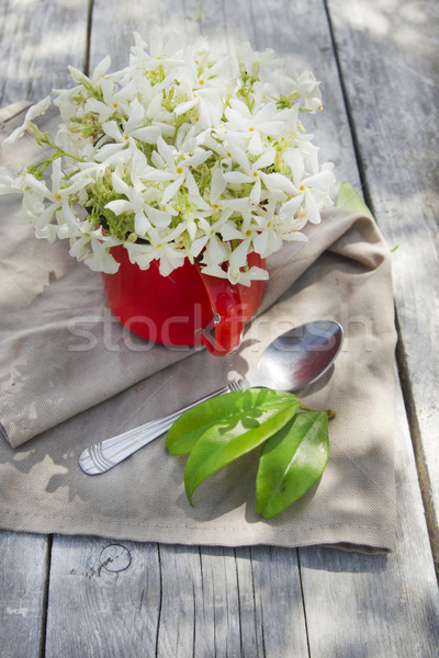 ポット 開花 収穫 花 自然 緑 ストックフォト © Fotografiche