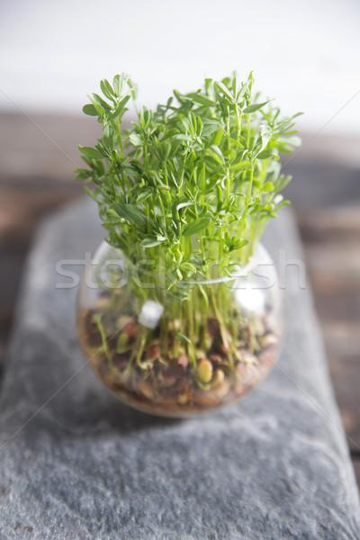 Küçük bitki örtüsü tohumları cam Stok fotoğraf © Fotografiche