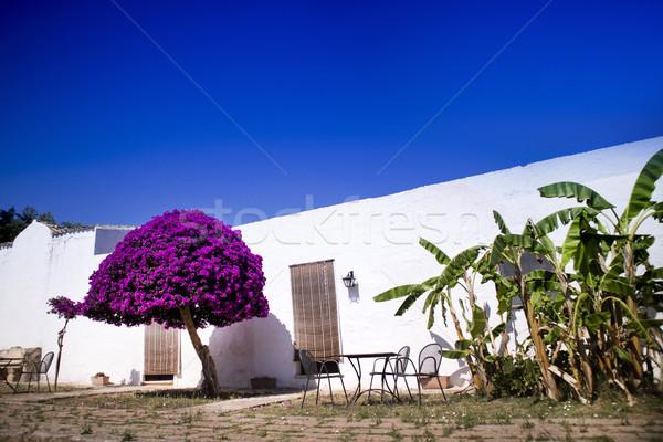 Bijzonder bouwkundig typisch boerderij baan witte Stockfoto © Fotografiche