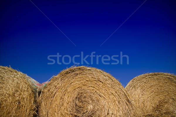 соломы животные стерня зимний сезон трава пейзаж Сток-фото © Fotografiche