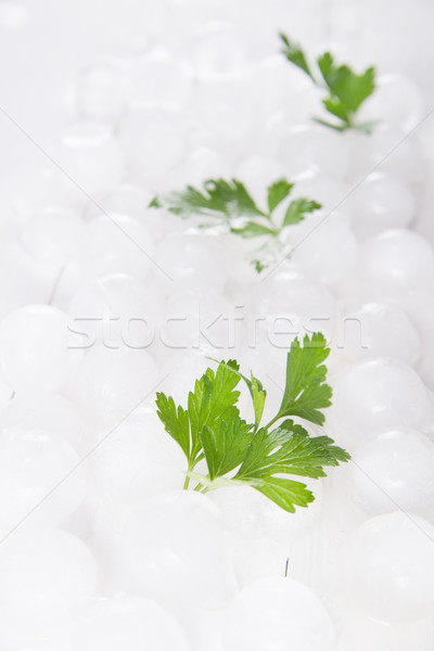 Peterselie bladeren vers bed natuur Stockfoto © Fotografiche