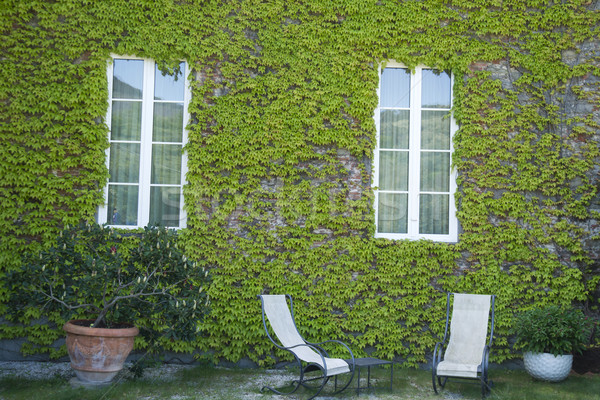 The ivy of Canada Stock photo © Fotografiche