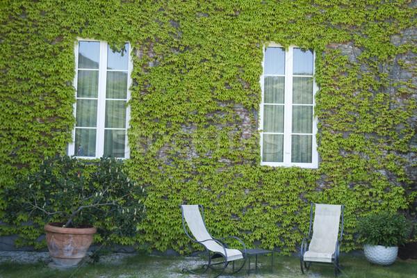 Hiedra escalada planta vid vegetación Foto stock © Fotografiche