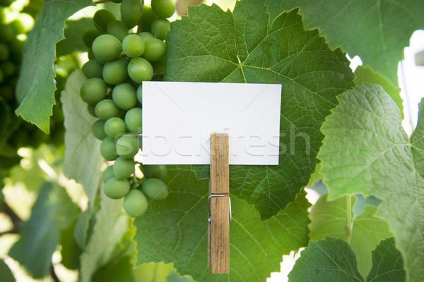 кислый виноград презентация тег вино Сток-фото © Fotografiche
