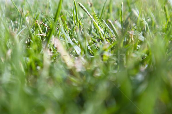 Frescos hierba verde particular verano temporada resumen Foto stock © Fotografiche