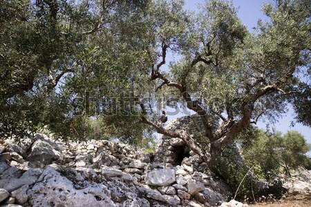 Typisch steen gebouw dier onderdak landschap Stockfoto © Fotografiche