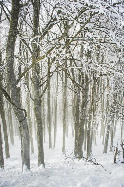 Stockfoto: Bos · winter · bomen · sneeuw · koud