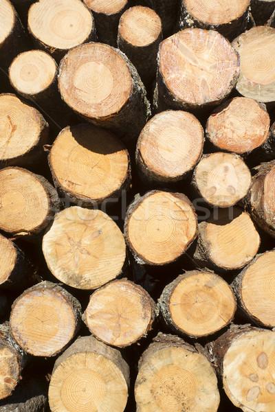 Pine bomen pijnboom klaar Stockfoto © Fotografiche