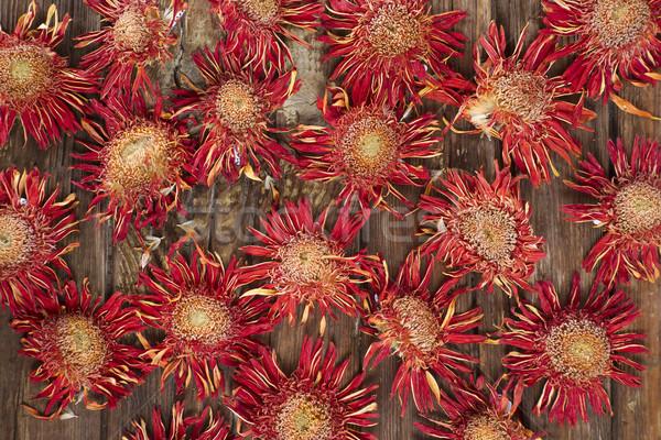 Mały suszy kwiaty kwiat pomarańczowy naturalnie Zdjęcia stock © Fotografiche