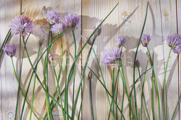 Chives in bloom  Stock photo © Fotografiche