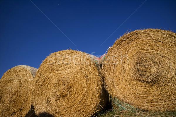 Straw pressed for animals Stock photo © Fotografiche