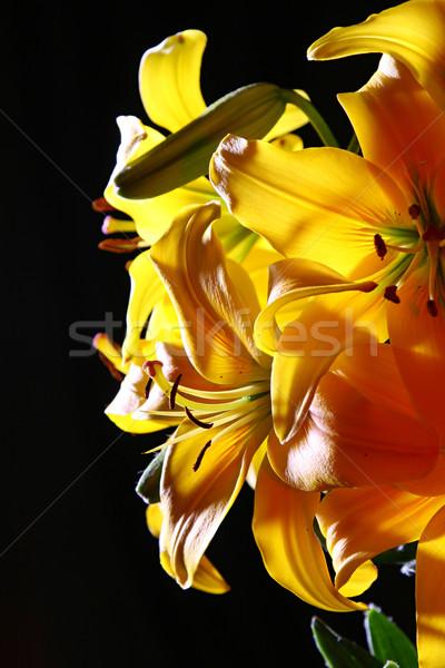 Zambak stüdyo buket renkli karanlık çiçek Stok fotoğraf © fotorobs