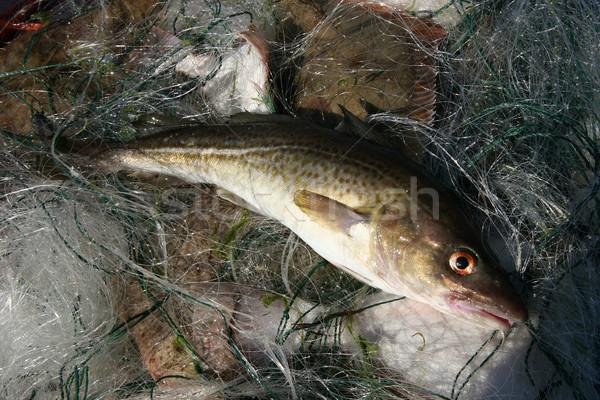 Mar báltico fora água olho mar pescaria Foto stock © fotorobs