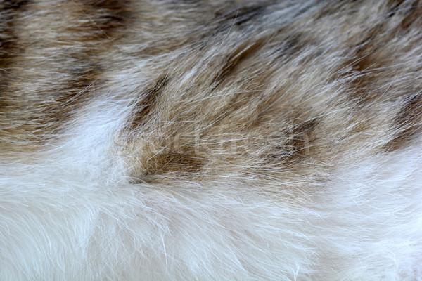 Macska fenyő közelkép háttér portré vicces Stock fotó © fotoscool