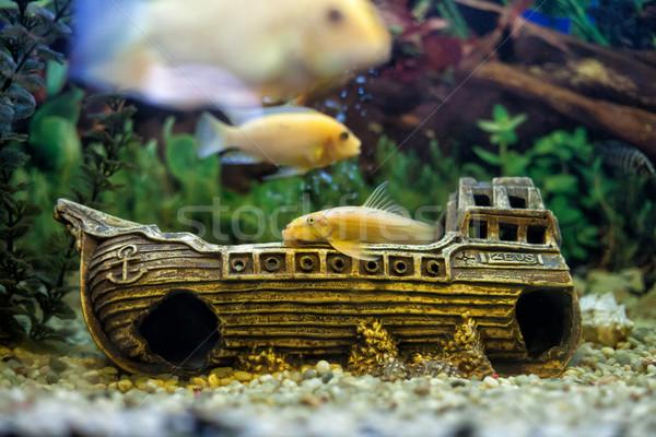 Fishes Stock photo © FotoVika