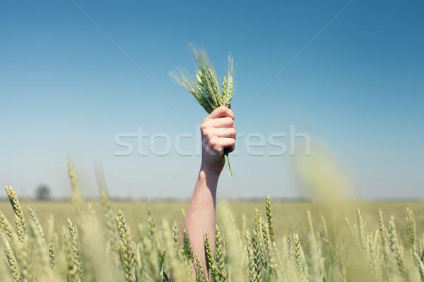 Hand tarwe oren groene veld hemel Stockfoto © FotoVika