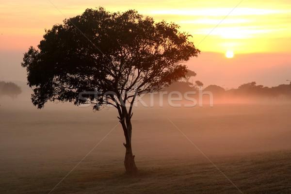 ストックフォト: ツリー · 霧 · 日の出 · 太陽 · 霧の