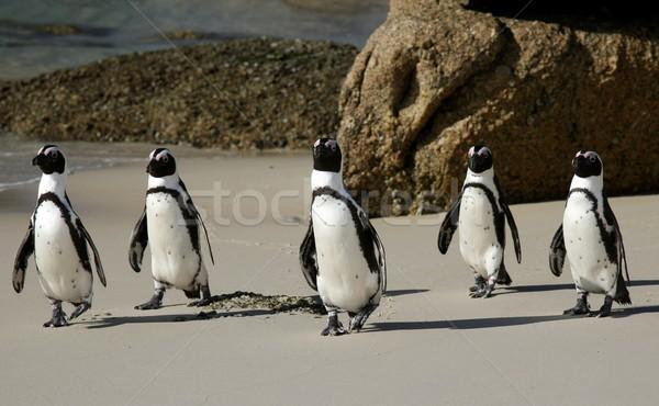 アフリカ 砂浜 海 鳥 旅行 砂 ストックフォト © fouroaks
