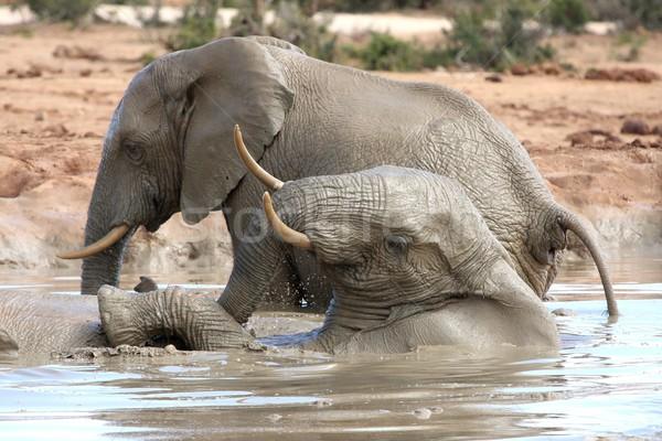African Elephant Water Fun Stock photo © fouroaks