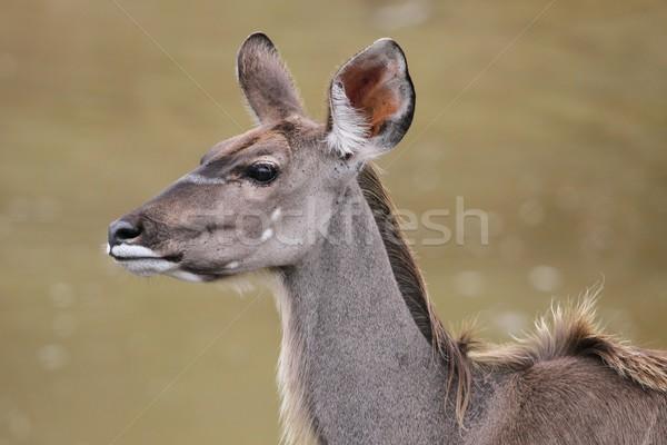 女性 プロファイル 美しい 耳 背景 ストックフォト © fouroaks