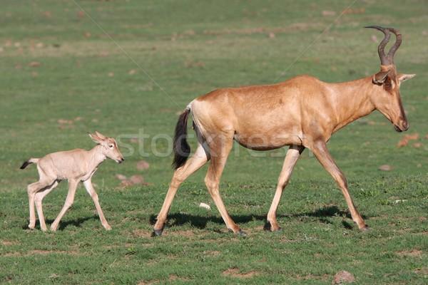 赤ちゃん 赤 ママ 新しい 生まれる を実行して ストックフォト © fouroaks