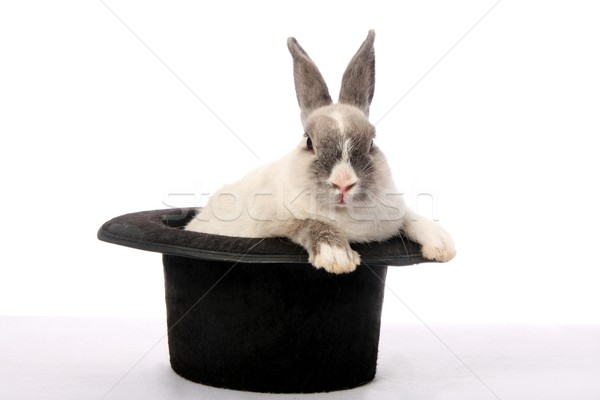 Lapin astuce cute lapin escalade sur Photo stock © fouroaks