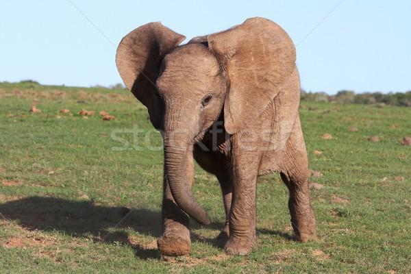 Bebê elefante africano corrida família criança diversão Foto stock © fouroaks