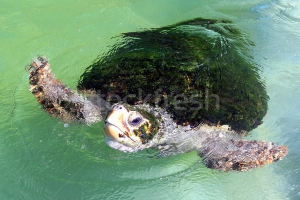 海 カメ 緑 カバー 戻る アップ ストックフォト © fouroaks
