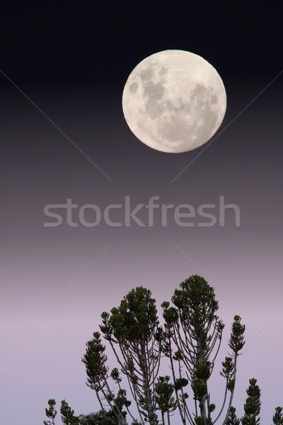 Pleine lune arbres premier plan lumière lune espace Photo stock © fouroaks