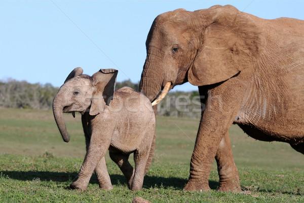 Elephant and Baby Stock photo © fouroaks