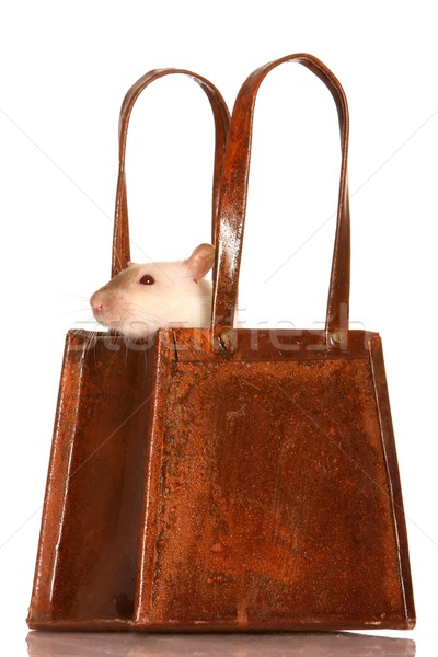 Stok fotoğraf: Sıçan · sepet · sevimli · beyaz · evcil · hayvan · dışarı