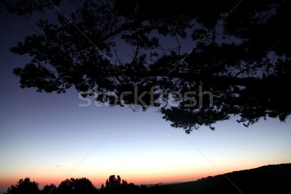 Foto d'archivio: Tramonto · silhouette · albero · cielo · sole