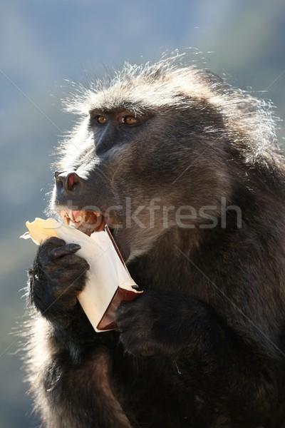 бабуин быстрого питания еды окна картофель фри Сток-фото © fouroaks
