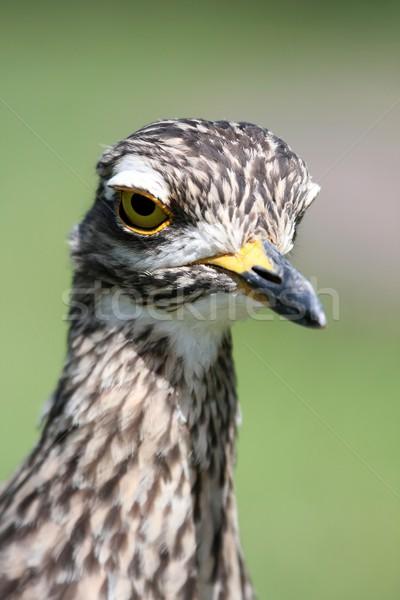鳥 肖像 自然 羽毛 アフリカ 公園 ストックフォト © fouroaks