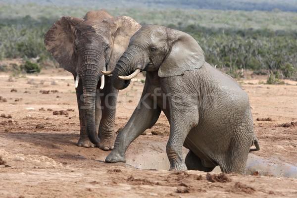 アフリカ 2 ビッグ 泥だらけの 登山 ストックフォト © fouroaks