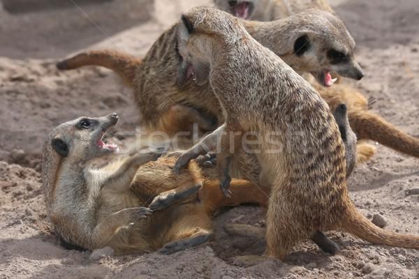 Vechten spelen zand gezicht natuur haren Stockfoto © fouroaks