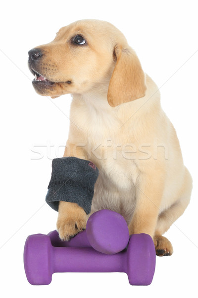 Cute Puppy Exercise Concept Stock photo © fouroaks