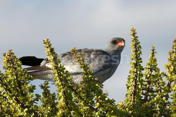 鳥 餌食 先頭 自然 オレンジ 緑 ストックフォト © fouroaks