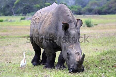 赤ちゃん アフリカゾウ 象 外に アフリカ 茂み ストックフォト © fouroaks
