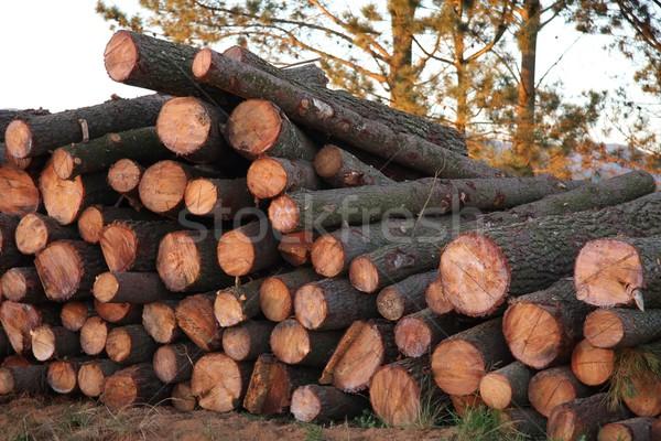 Kiefer geschnitten gestapelt Boden Holz Wald Stock foto © fouroaks