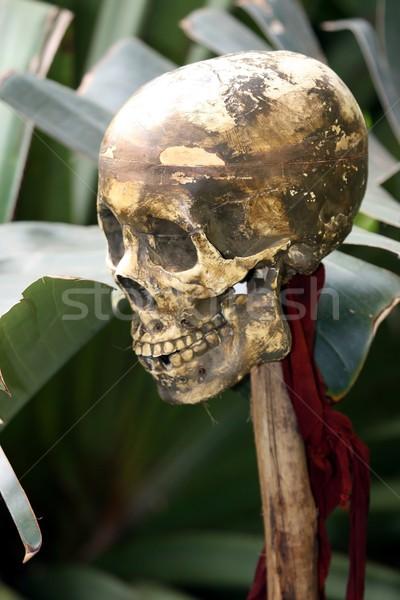 Emberi koponya áldozat fából készült pólus dzsungel Stock fotó © fouroaks