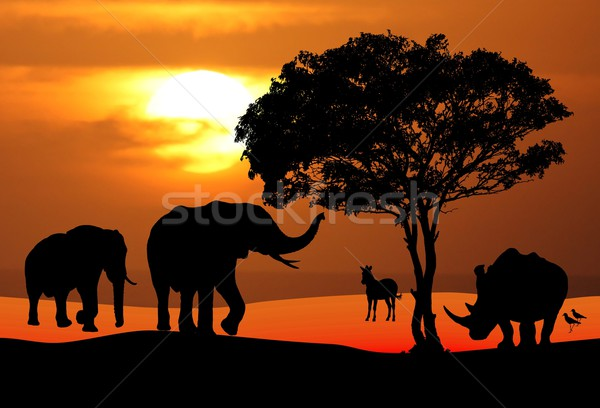 African Wildlife Sunset Scene Stock photo © fouroaks