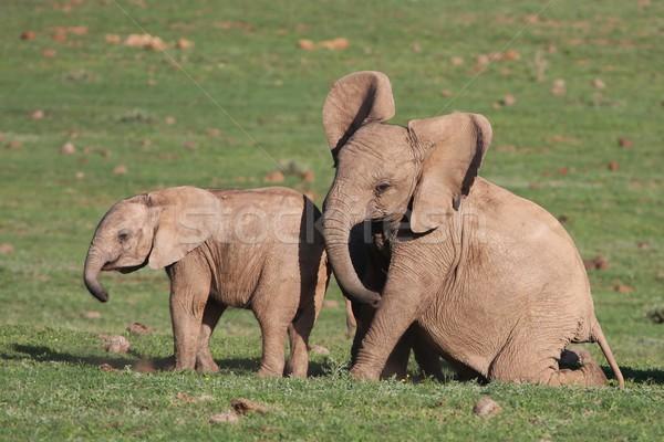赤ちゃん 演奏 2 小さな アフリカ ストックフォト © fouroaks