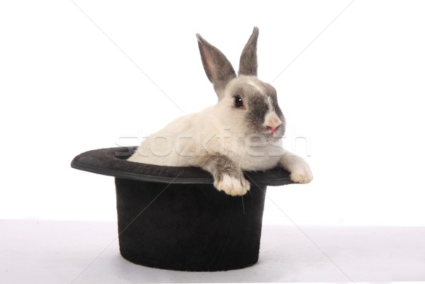 Rabbit Trick Stock photo © fouroaks