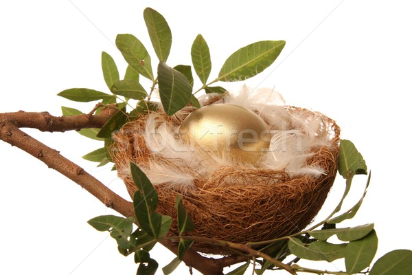 Golden Nest Egg Stock photo © fouroaks